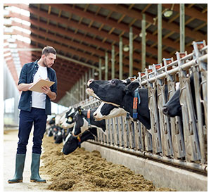 dairy industry worker